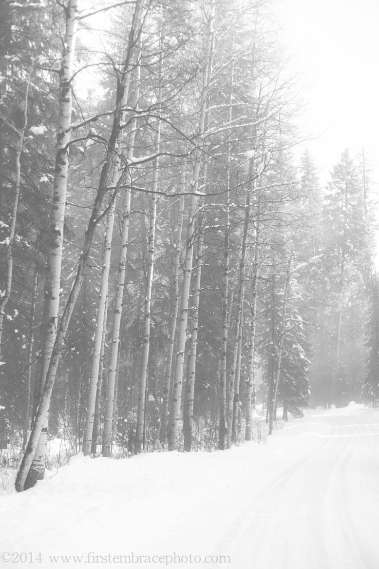 trees-8350